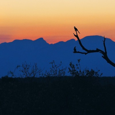 Bird silhouettes against a South African sunset. Taken with my Olympus em1 & 40-150mm 2.8 pro lens.