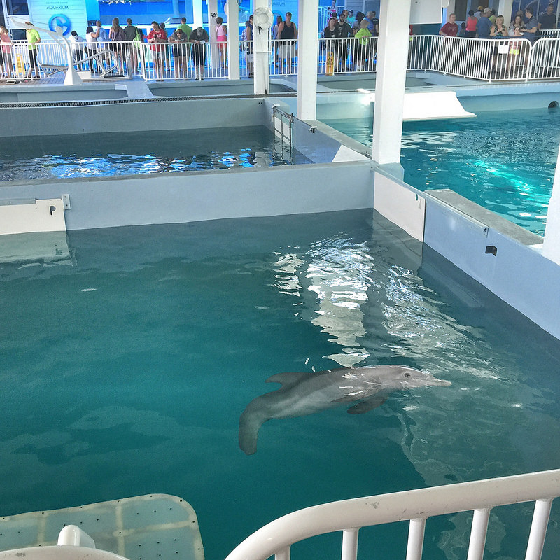 Winter of Dolphin Tale & Dolphin Tale 2