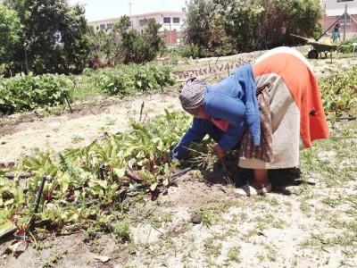 Organic gardens in Khayelitsha, South Africa