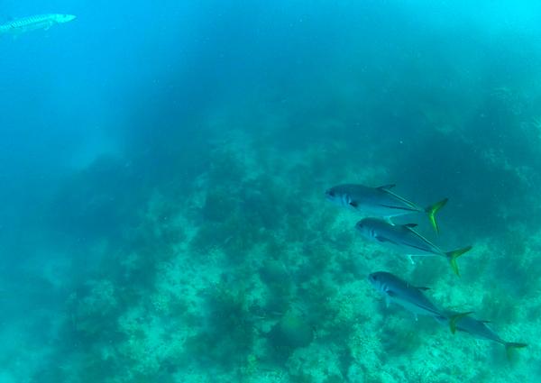 Tropical fish at Looe Key Reef