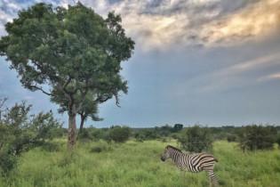 iPhone travel photography, wanderingiphone, mobile photography workshops, wildlife
