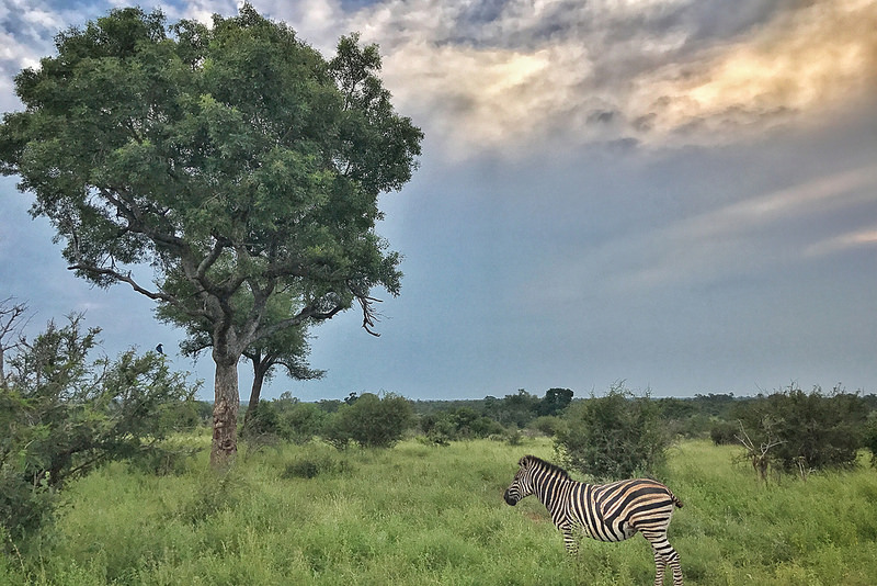 Photographing Your Safari With A Smartphone