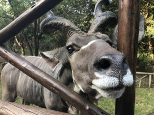 an airbnb with wild animals in the backyard in south africa