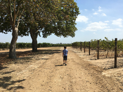 Boy walking at Vergenoegd Wine Estate